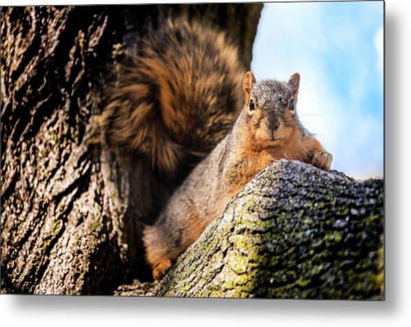 Fox Squirrel Watching Me Metal Print