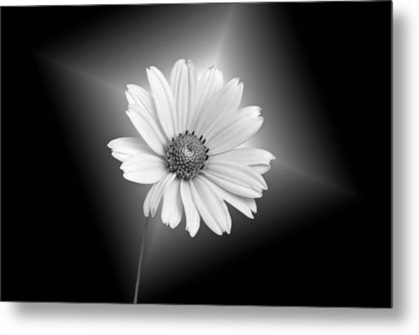 Fragile Beauty Metal Print by Maria Dryfhout