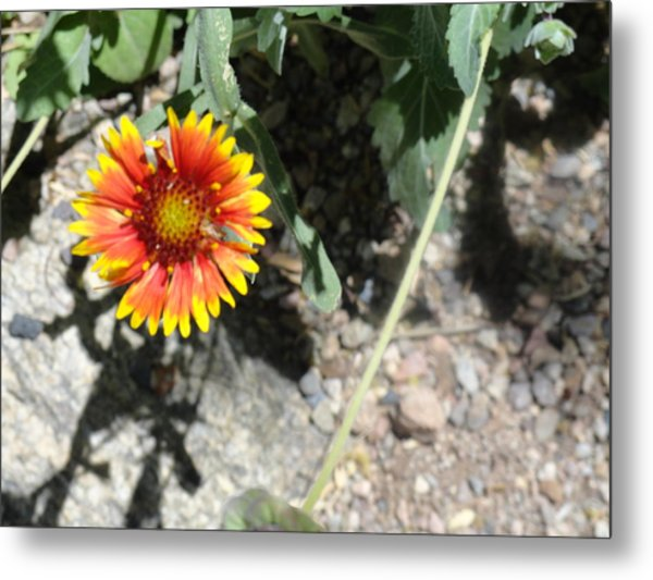 Fragile Floral Life On The Trail Metal Print