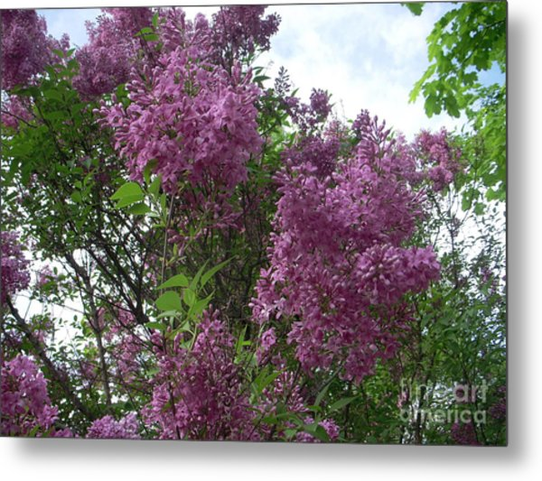 Fragrance Fills The Air Metal Print by Deborah Finley