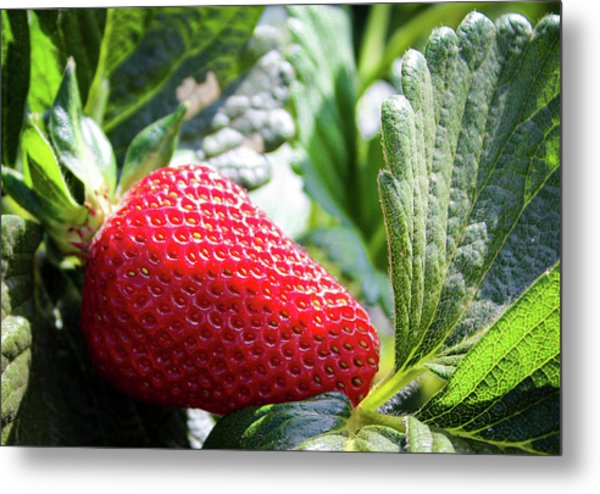 Metal Print featuring the photograph Fraise by Alison Frank