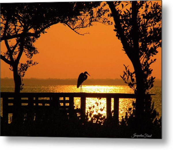 Framed Great White Egret Metal Print