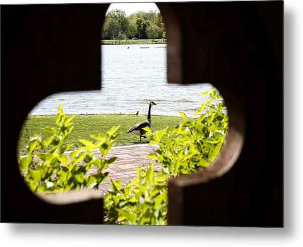 Framed Nature Metal Print