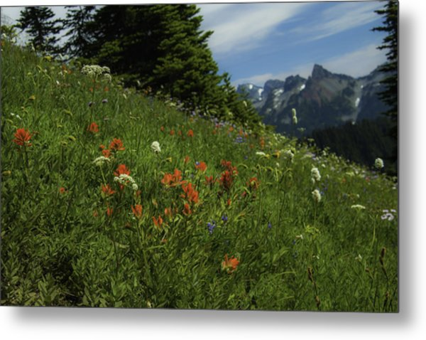 Framing The Tatoosh Metal Print