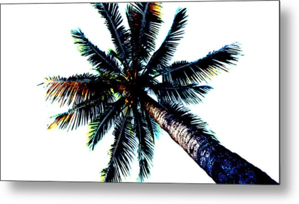 Frazzled Palm Tree Metal Print