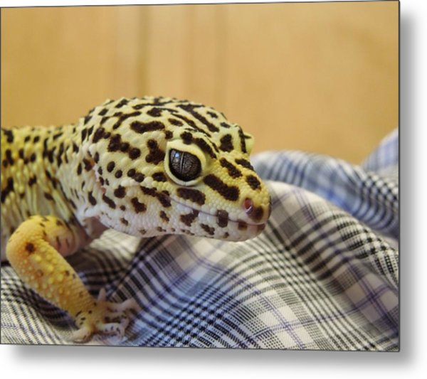 Freckles The Leopard Spotted Gecko Metal Print