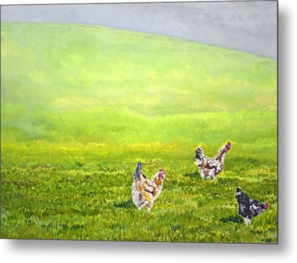 Free Range Chickens Metal Print by Francis Robson