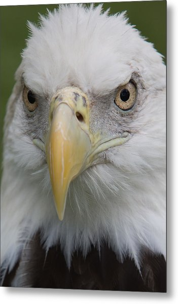 Freedom Eagle Metal Print