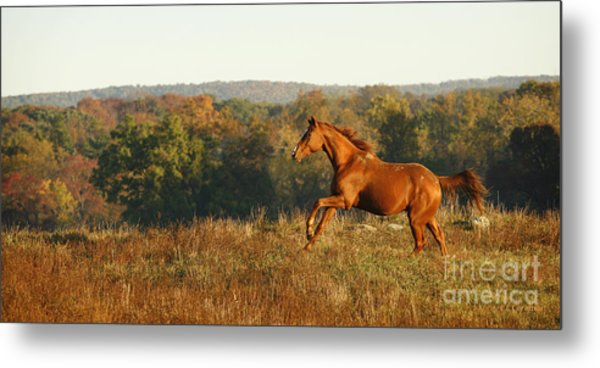 Freedom In The Late Afternoon Metal Print