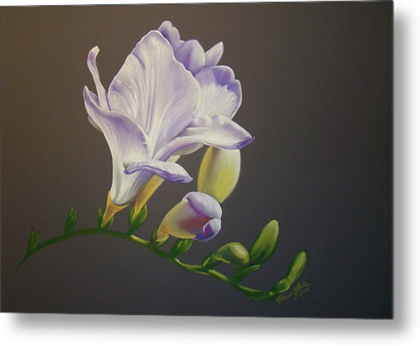 Freesia 1 Metal Print by Brandi York