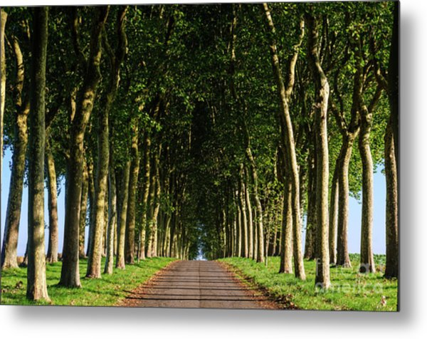 French Tree Lined Country Lane Metal Print