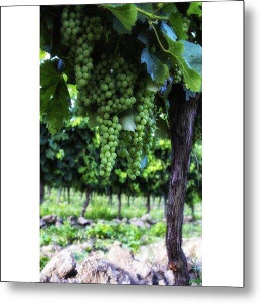 French Vineyard Metal Print