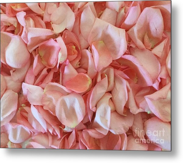 Fresh Rose Petals Metal Print