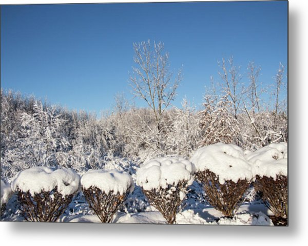 Fresh Snowfall Metal Print