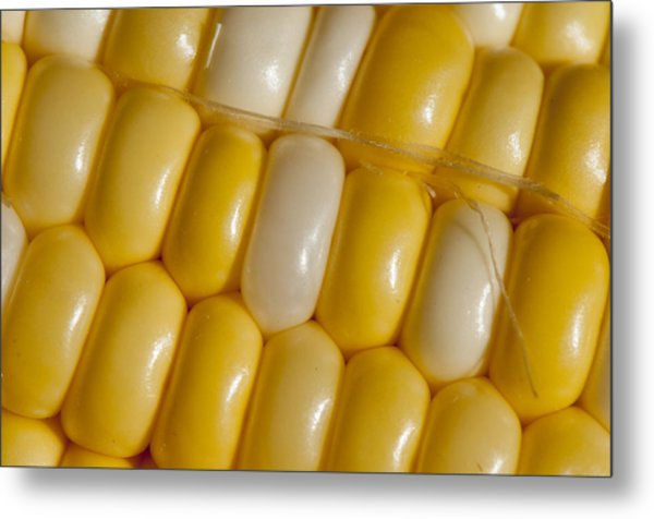 Fresh Yellow Corn Metal Print