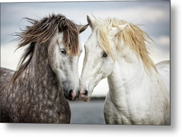 Friends Iv - Colour Metal Print by Tim Booth