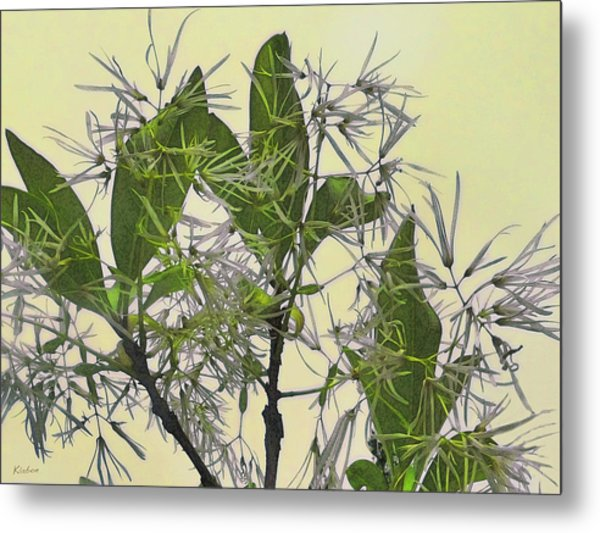 Fringe Tree Metal Print