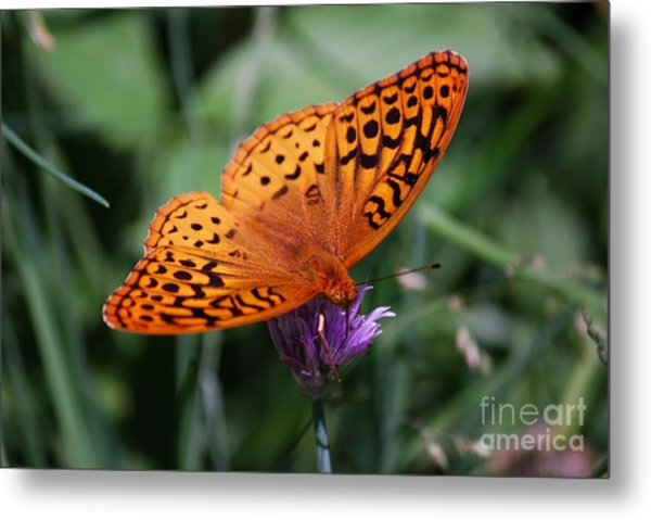 Fritillary Wings Metal Print