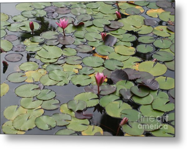 Frog Gardens Metal Print by Amy Holmes