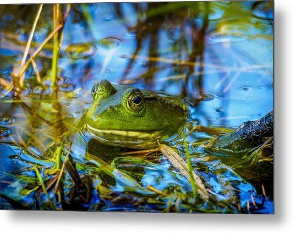 Frog In My Pond Metal Print