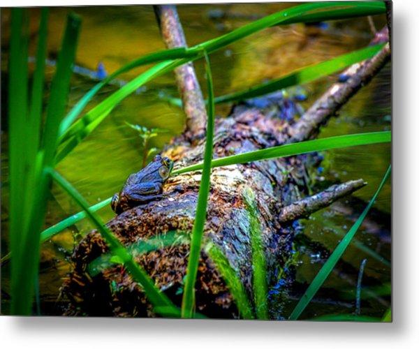 Frog On A Log 1 Metal Print