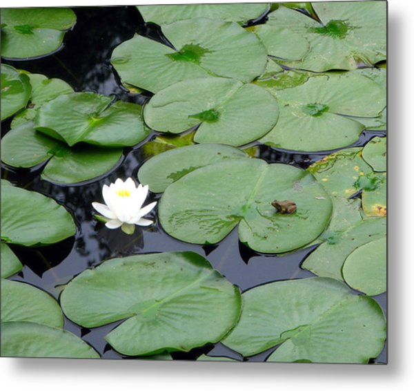 Frog On Lily Pad Metal Print