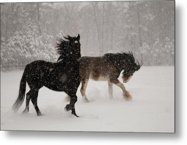 Frolic In The Snow Metal Print