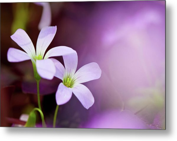 From Garden Of Dream Metal Print
