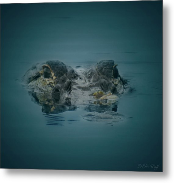 From The Series I Am Gator Number 6 Metal Print