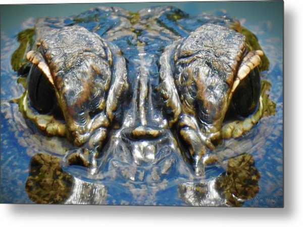 From The Series I Am Gator Number 7 Metal Print
