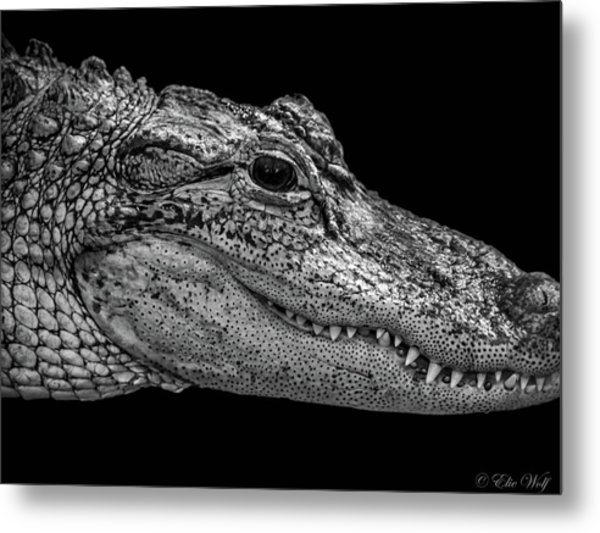 From The Series I Am Gator Number 9 Metal Print