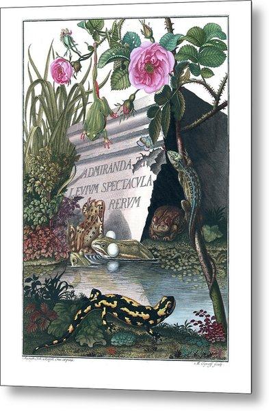 Frontis Of Historia Naturalis Ranarum Nostratium Metal Print
