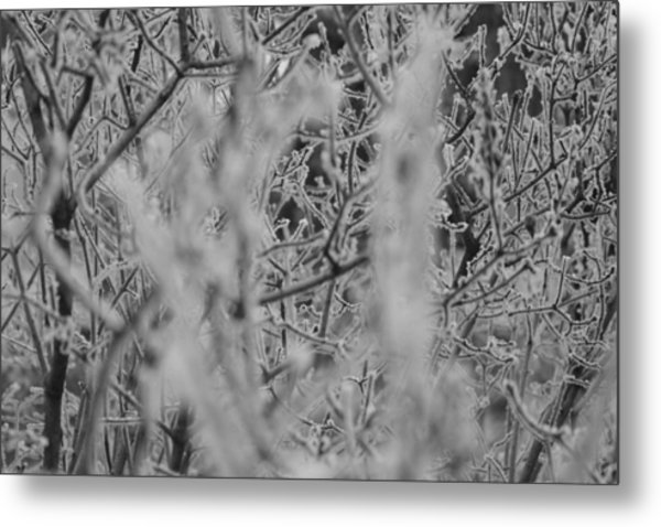 Metal Print featuring the photograph Frost 2 by Antonio Romero