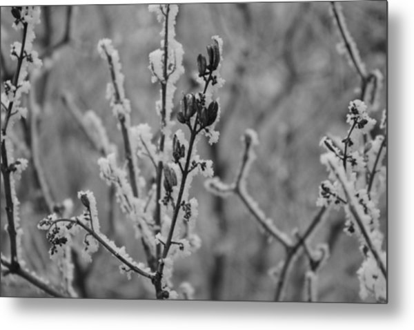 Metal Print featuring the photograph Frost 5 by Antonio Romero