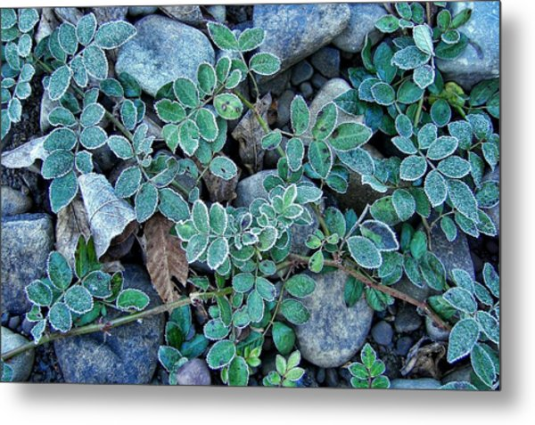 Frost Metal Print by JAMART Photography