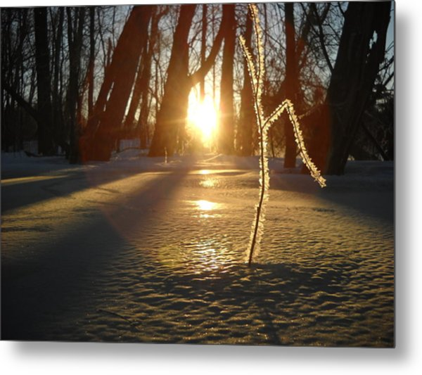 Frost On Sapling At Sunrise Metal Print