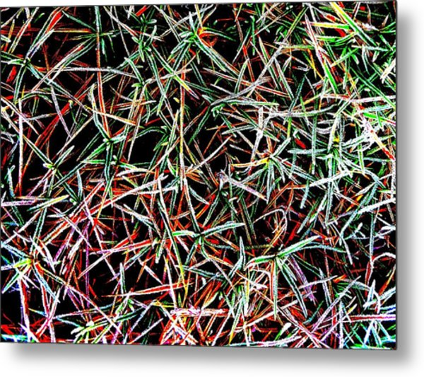Frost On The Grass Metal Print