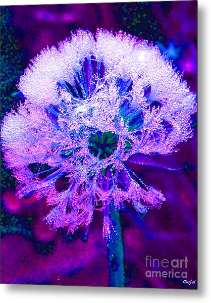 Frosted Metal Print by Nick Gustafson
