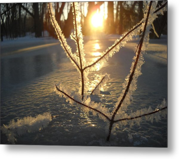 Frosty Branches At Sunrise Metal Print