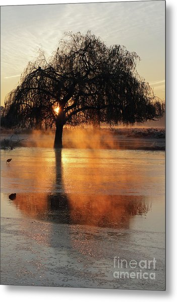 Frosty Sunrise In Bushy Park London 2 Metal Print