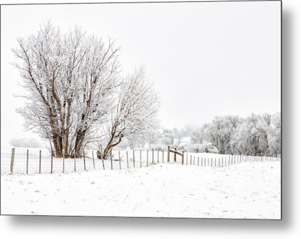 Frosty Winter Scene Metal Print