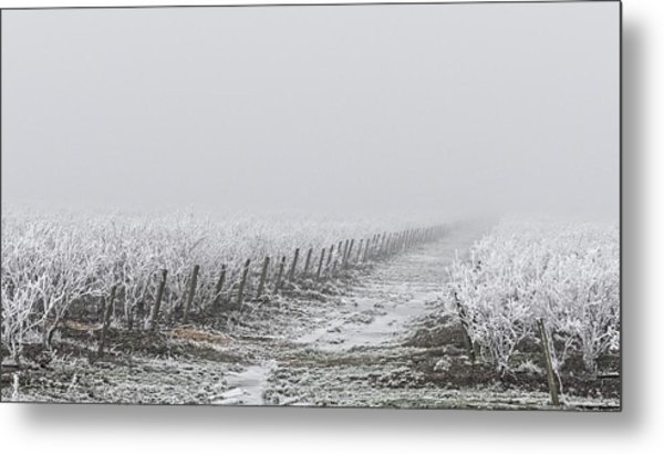 Frozen Blueberry Mist Metal Print