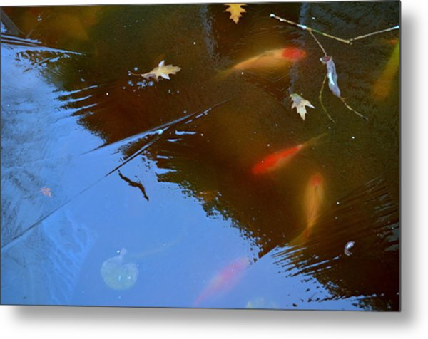 Metal Print featuring the photograph Frozen Carp by Richard Ricci