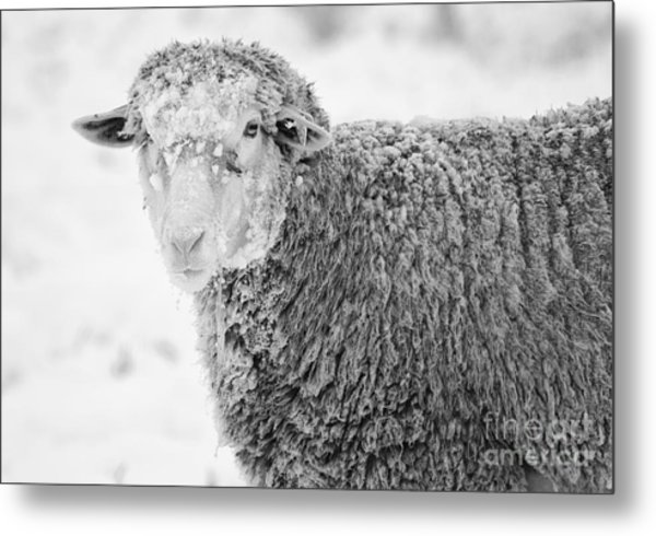 Frozen Dinner Metal Print