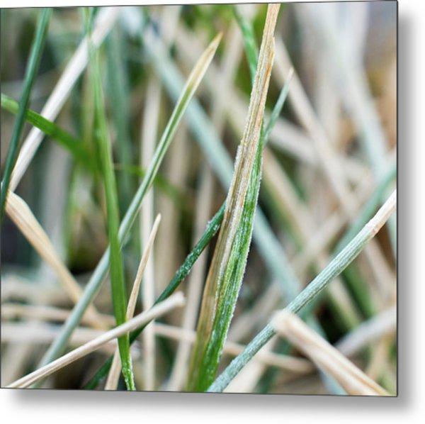 Frozen Grass Metal Print