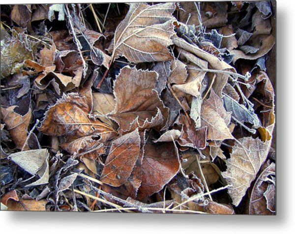Frozen Metal Print by JAMART Photography