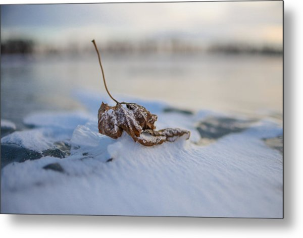 Frozen Leaf On Lake Reno Metal Print