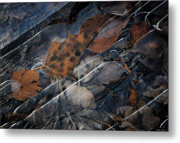 Frozen Leaves In Fall Metal Print by Jonathan Hansen