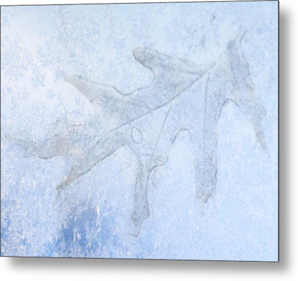 Frozen Oak Leaf Imprint Metal Print