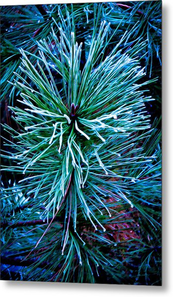 Frozen Pine Needles  Metal Print